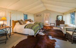 Lizard Head Tent