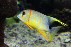 reef-1758132_960_720