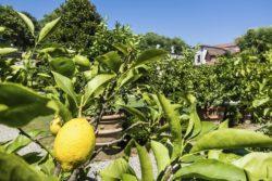 Wikinger Gartenreise Toskana