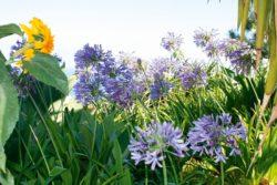 Garteninsel Madeira