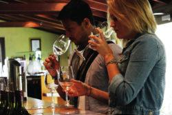 Weingut Cellar Door Weinprobe