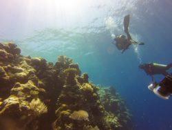 reef-1148995_640
